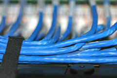 Blue Network Connecting Cabling. Network cables secured with velcro Stock Images