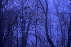 Blue night forest. In Kiev Royalty Free Stock Photos
