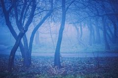 Blue night forest landscape. Autumn foggy weather in park. Blue night forest landscape royalty free stock photo