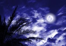 Blue nigth moon Stock Photo