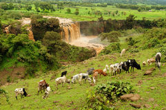 Blue Nile Falls in Ethiopia Stock Photo