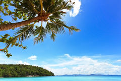 Blue ocean and bright blue sky with coconut palm Royalty Free Stock Images
