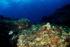 Blue ocean Stock Photography
