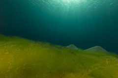 Blue ocean, sandy bottom and algae in the Red Sea. Royalty Free Stock Images