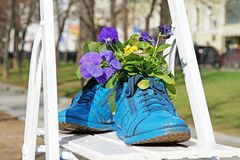 Blue old boots. Used as flower pots stock images