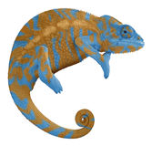 Blue and Orange Chameleon. Ambilobe panther chameleon with edited colors Stock Images