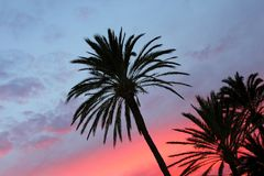 Blue and orange red sunset palm trees Royalty Free Stock Images