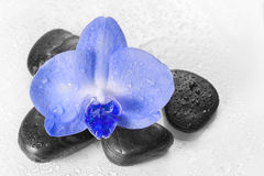 Blue orchid with reflection in water Royalty Free Stock Image