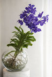 Blue Orchids in glass bowl Royalty Free Stock Photo