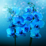 Blue orchids, picture for design interior royalty free stock images