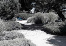 Blue Painted Bench in Park. Single blue painted bench in a summer garden with a path and surrounded by trees and bushes royalty free stock photo
