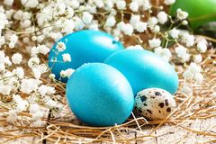 Blue Painted Easter eggs and quail eggs in the straw with a small white spring flowers, selective focus stock photos