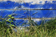 Blue painted wooden fence with grass Royalty Free Stock Photography