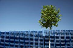 Blue palette - blue sky - green tree stock photos