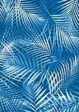 Blue palm leaves. Vector illustration of palm leaves Stock Images
