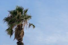 blue palm sky tree στοκ εικόνα με δικαίωμα ελεύθερης χρήσης