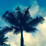 Blue Palm Tree in Maui Hawaii Stock Images