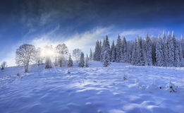 Blue panorama of winter forest in the mountains Stock Photo