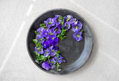 Blue pansies in a metal tray on concrete background Stock Image