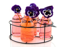 Blue Pansies in pink bottles. Isolated over white Stock Photos
