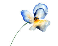 Blue pansy flower Stock Photos