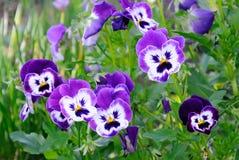 Gerbera daisy over abstract background stock image image for Plantas de exterior que no necesitan sol