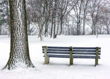 Blue park bench under large snow covered trees Stock Photos