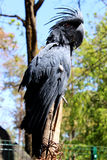 Blue parrot cockatoo Royalty Free Stock Images
