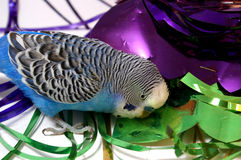 Blue parrot and tinsel from foil. Royalty Free Stock Image