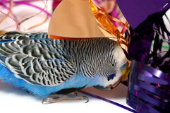 Blue parrot and tinsel from foil. Royalty Free Stock Images