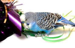 Blue parrot and tinsel from foil. Stock Photos