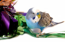 Blue parrot and tinsel from foil. Stock Image