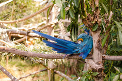 Blue parrot at the zoo Royalty Free Stock Photography
