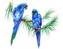Blue parrots on a branch felt pen hand drawn illustration on white background. Stock Photos