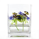 Blue passion flowers in vase Stock Photo
