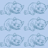 Blue pattern with cats. Blue pattern with sketch of realistic kitten Royalty Free Stock Photos