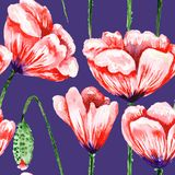 Blue pattern with watercolor poppies Royalty Free Stock Images