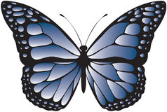 Blue patterned butterfly Stock Photography