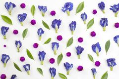 Blue Pea And Globe Amaranth flowers And Green Leaves Royalty Free Stock Photo