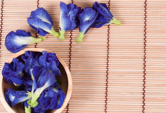 Blue pea butterfly pea close up background. Stock Photos