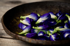 Blue pea flowers. Double petal blue pea flowers in metal plate stock images