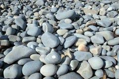 Blue pebble beach Stock Photography