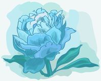 Blue peony in pastel colors. Tender Royalty Free Stock Images
