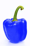 Blue pepper Royalty Free Stock Photo
