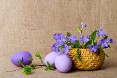 Blue periwinkle in the basket and easter eggs Royalty Free Stock Photography