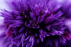 Blue petals royalty free stock photos