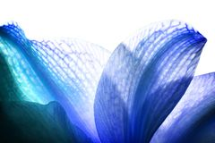 Blue Petals Royalty Free Stock Images