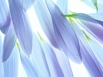 Blue petals Royalty Free Stock Photo