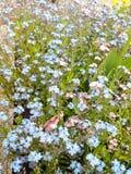 Blue petals Stock Image