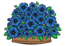 Blue  petunia flowers in pot isolated on white Royalty Free Stock Images